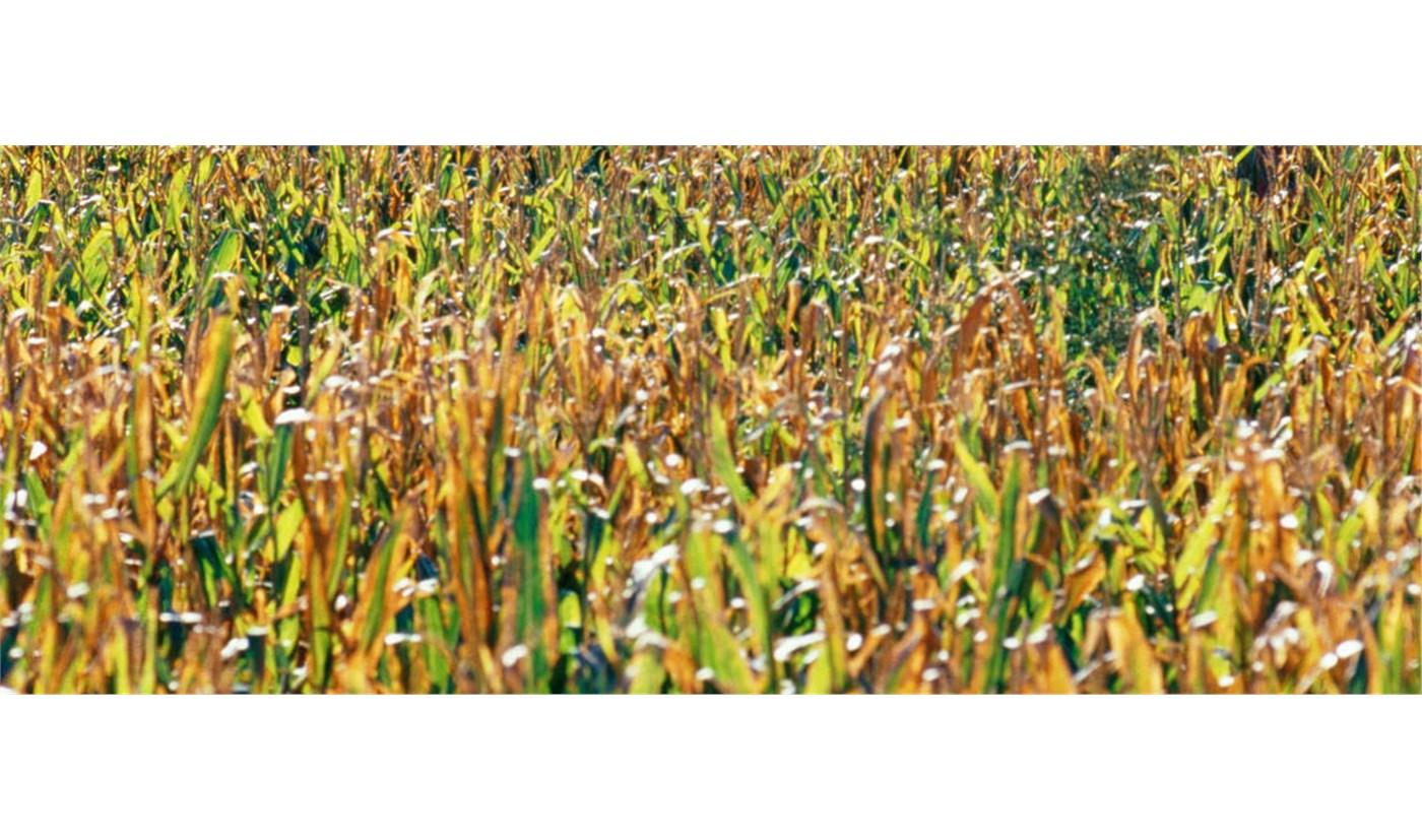 La buena información, un factor para mejorar la competitividad en la empresa agroalimentaria